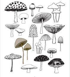 Drawn mushroom alice in wonderland mushroom Edition drawing houses  limited