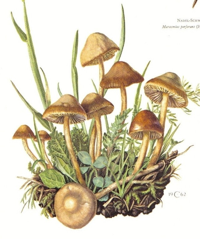 Drawn mushroom botanical Drawing images Pinterest 90 on