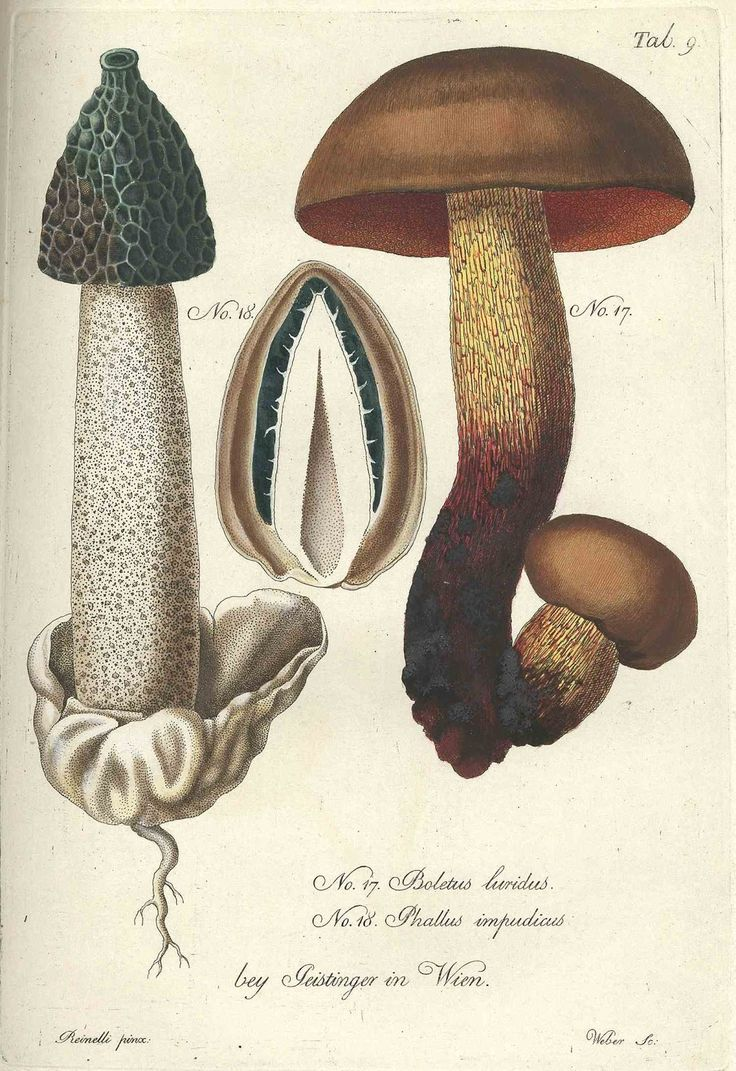 Drawn mushroom botanical About this Pinterest on on