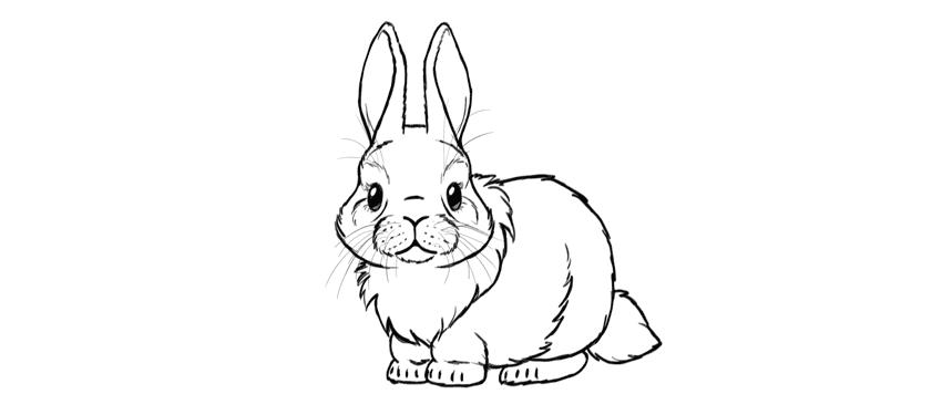 Drawn music bunny Bunny cute Cute step by