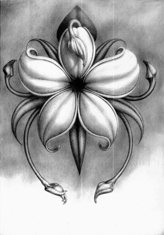 Drawn music notes pencil sketch Images drawings drawings flowers Images