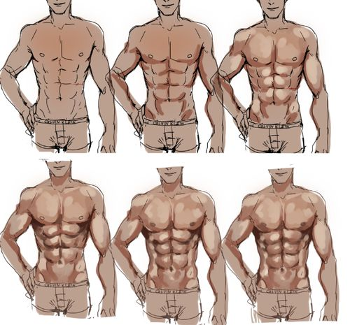Drawn mussel abdominal Pin on Muscles best and