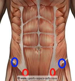 Drawn mussel abdominal Circles lower About Abdominal are