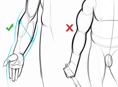 Drawn mussel forearm Drawing leads the curve thing