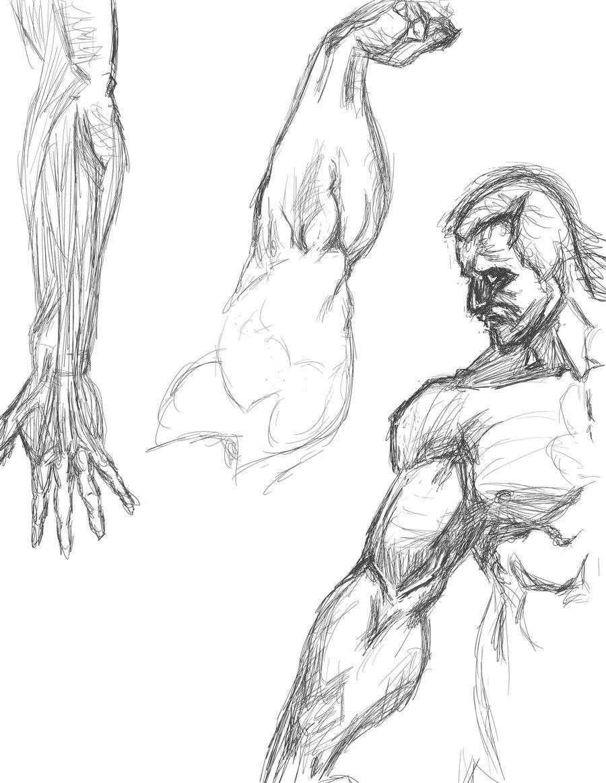 Drawn mussel forearm Forearm/Muscle sketch DeviantArt PurplePlague sketch