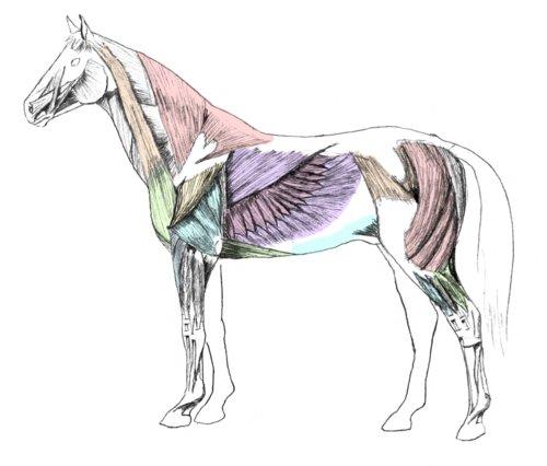 Drawn mussel Horsemanship Gore Horse ®