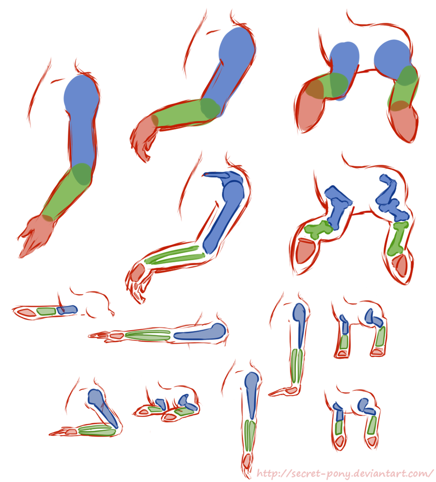 Drawn my little pony anatomy Legs and secret by pony