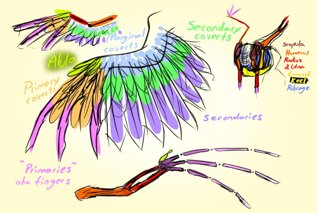 Drawn my little pony pegasus wing Study Pegasus MLP: DeviantArt by