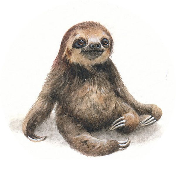 Drawn sloth white background 25x24mm sloth the Sloth #FURSDAYS1