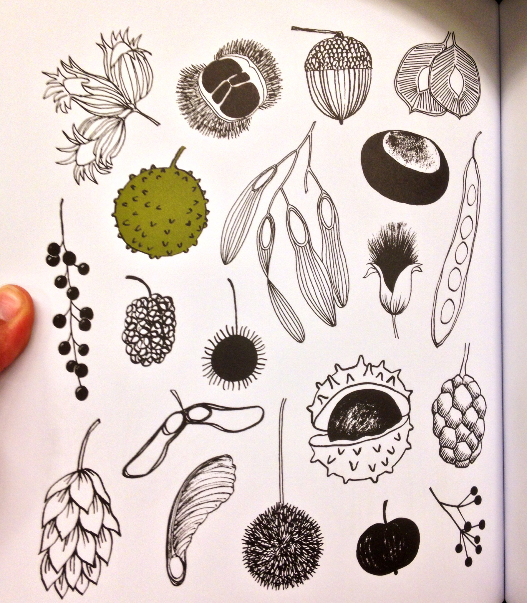 Drawn nature Ways  Draw seeds Eloise