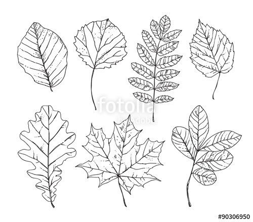 Drawn nature leaf Drawn Sketch nature nature hand