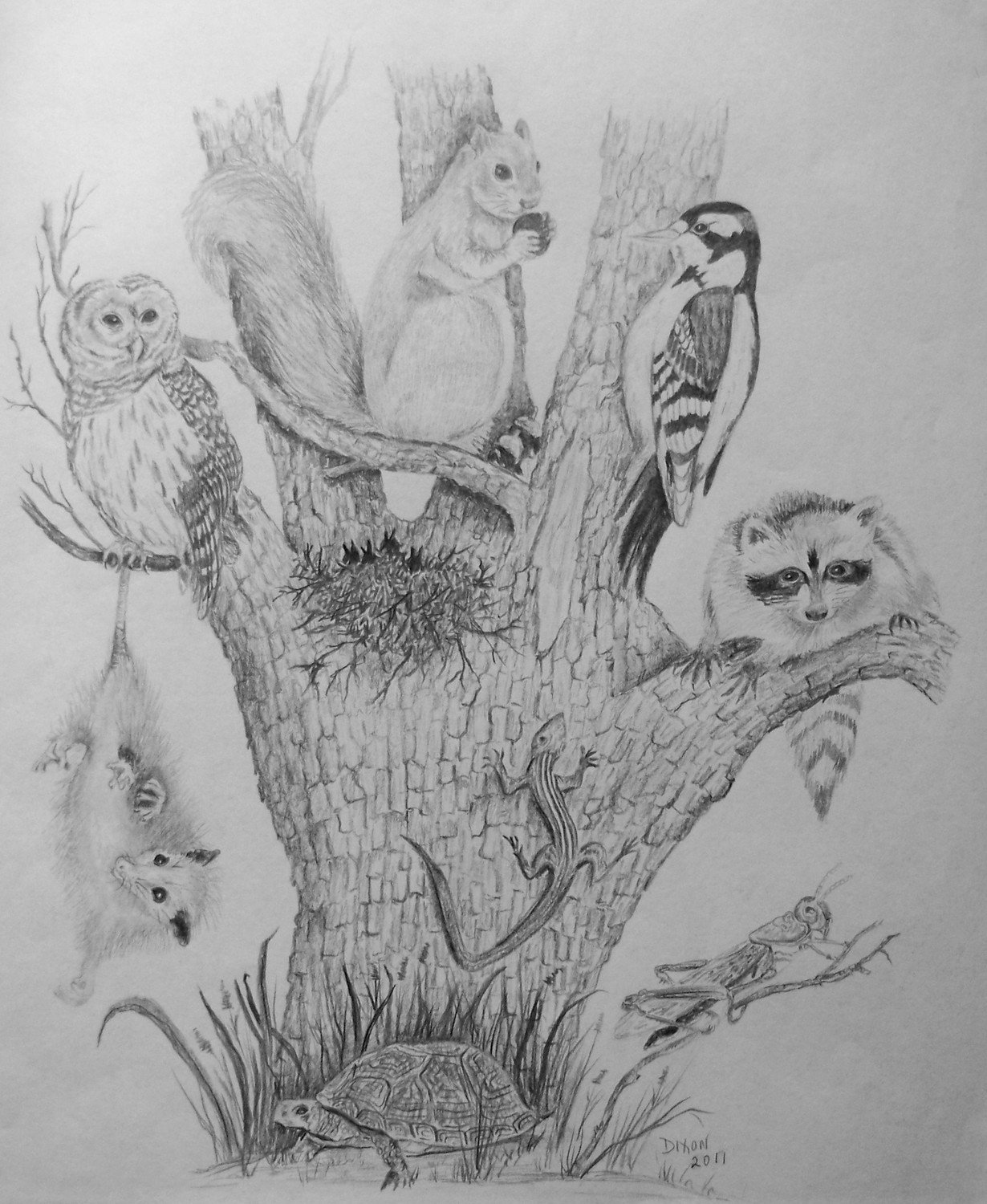 Drawn butterfly ever nature Nature of of with Animals