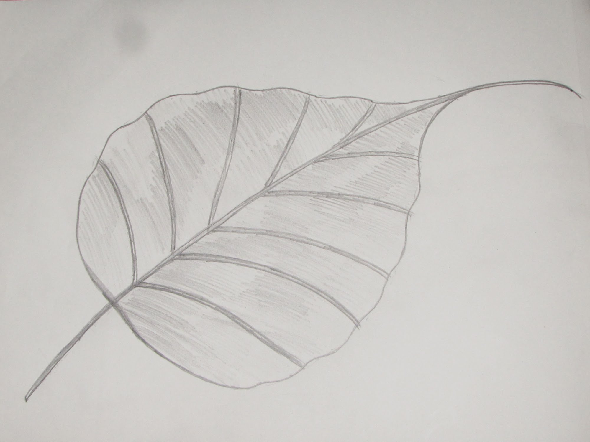 Drawn leaves shaded leaf Religiosa Draw Ficus Leaf Sketch