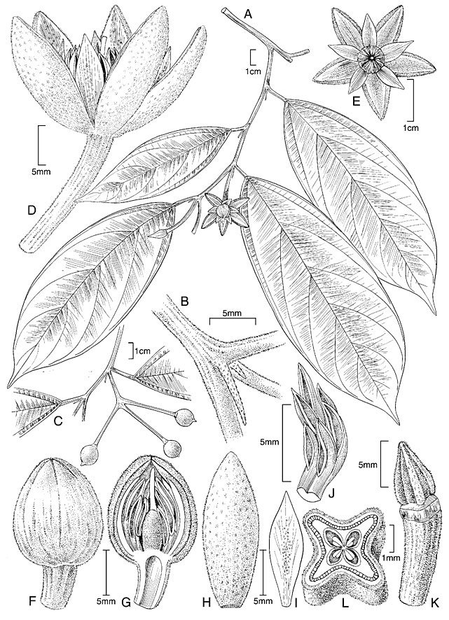 Drawn plant scientific Of Alice Tangerini by Final