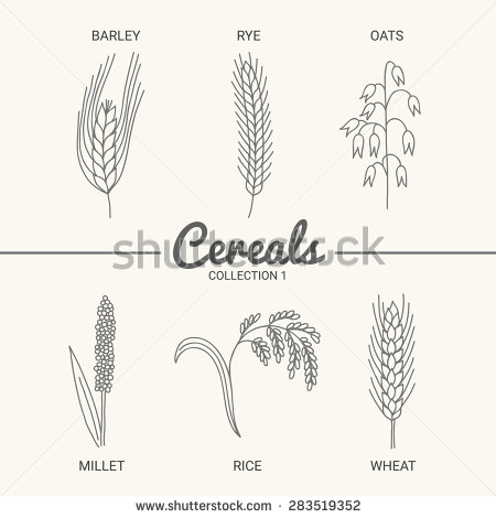 Drawn oat Of oats six wheat rye
