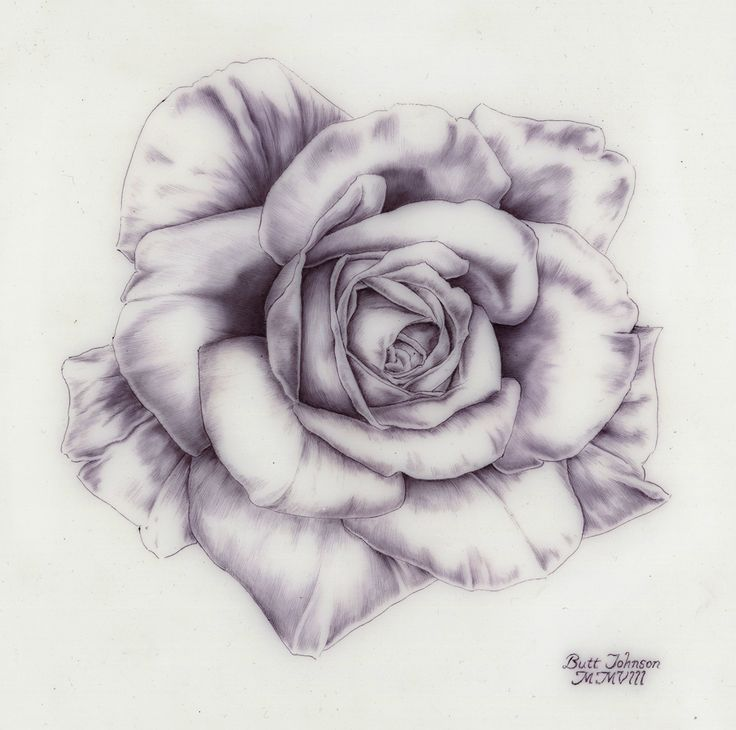 Drawn rose gangster Drawing 252 this on more