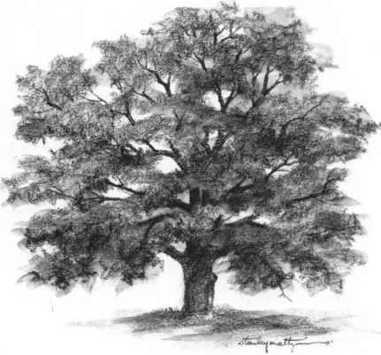 Drawn river elementary drawing exam nature 20+ on tree Pencil NatureOak