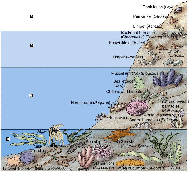 Sea Bed clipart ocean ecosystem #10