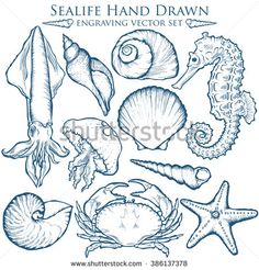 Drawn sea life shell Vector {Spoonflower wild sea Great