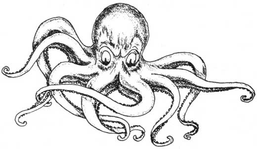 Drawn octopus Smarter Crony The Some Than
