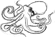 Drawn octopus Octopus  Tutorials Draw to