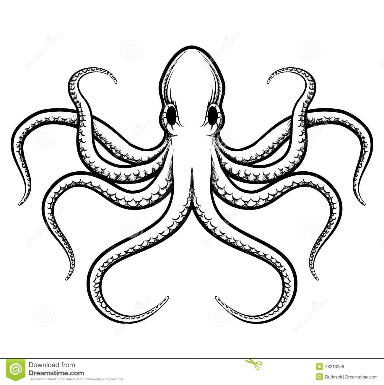 Drawn octopus Stock Stock 48213256 Octopus Vector