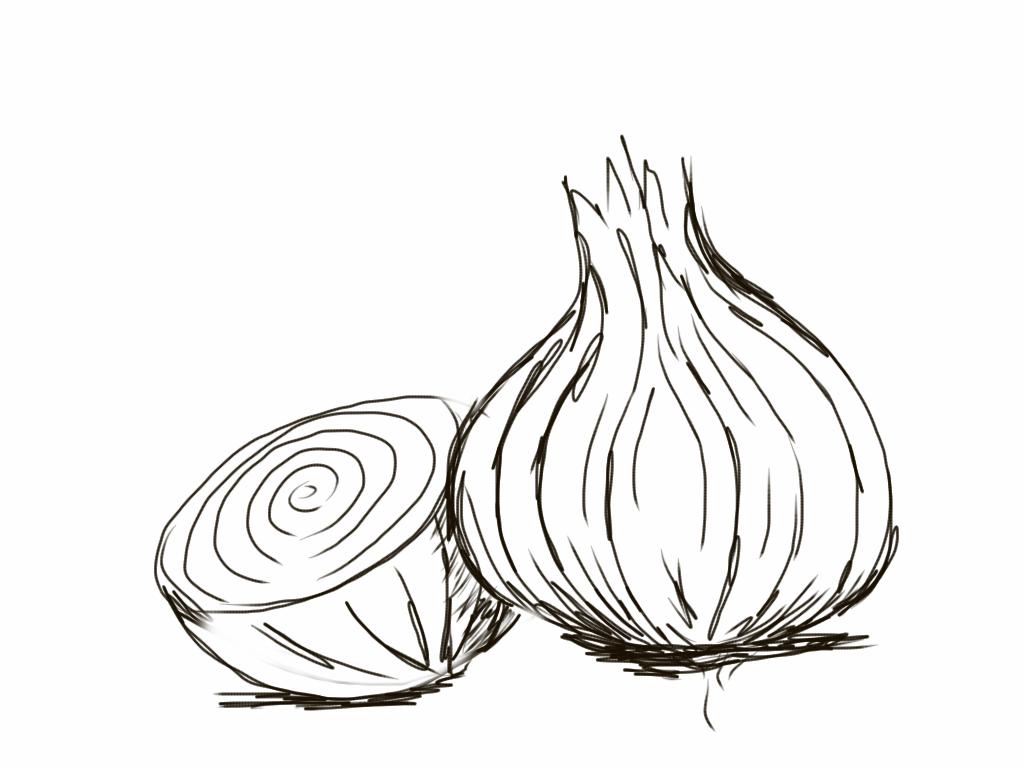 Drawn onion Drawings 000 Onions Bad 10