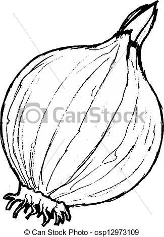 Drawn onion Cartoon Hand of Vector onion