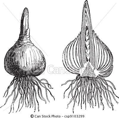 Drawn onion Pinterest Senior Sinner Onion on