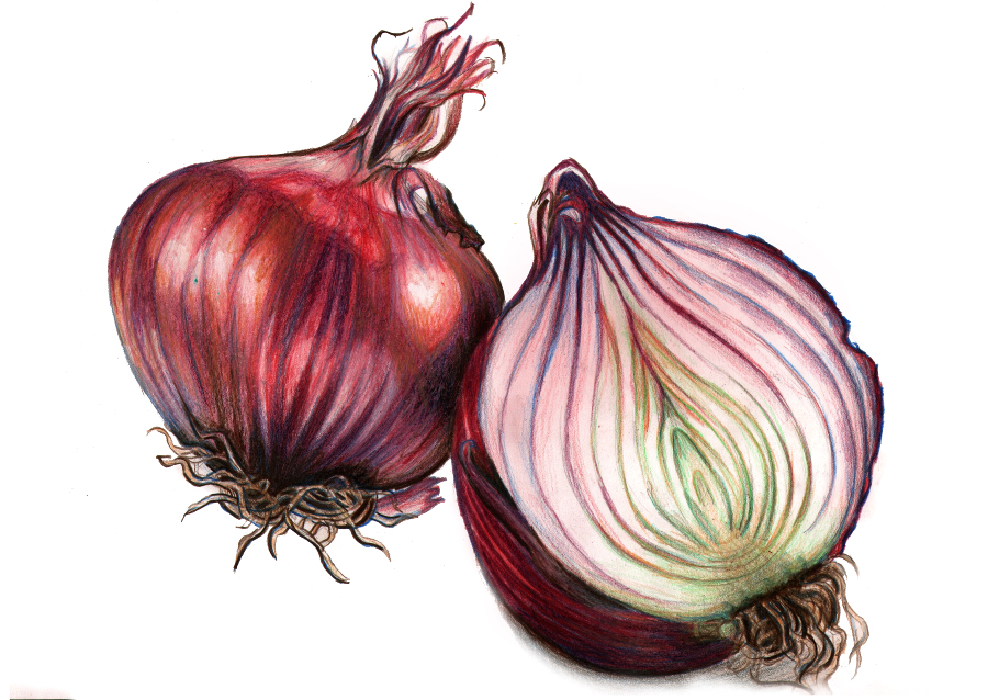 Drawn onion Jpg onion red sliced_900 red
