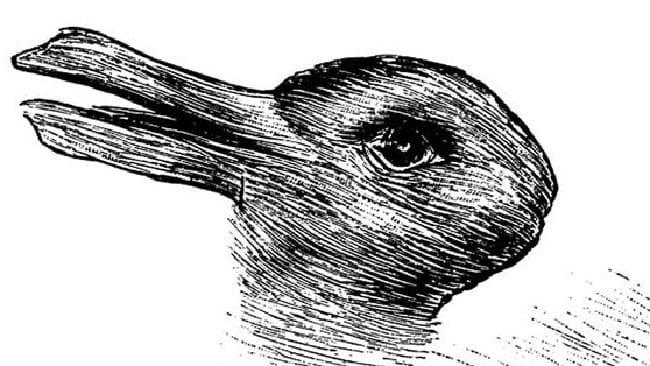 Drawn optical illusion mind bending Duck Mind  Bending Brain