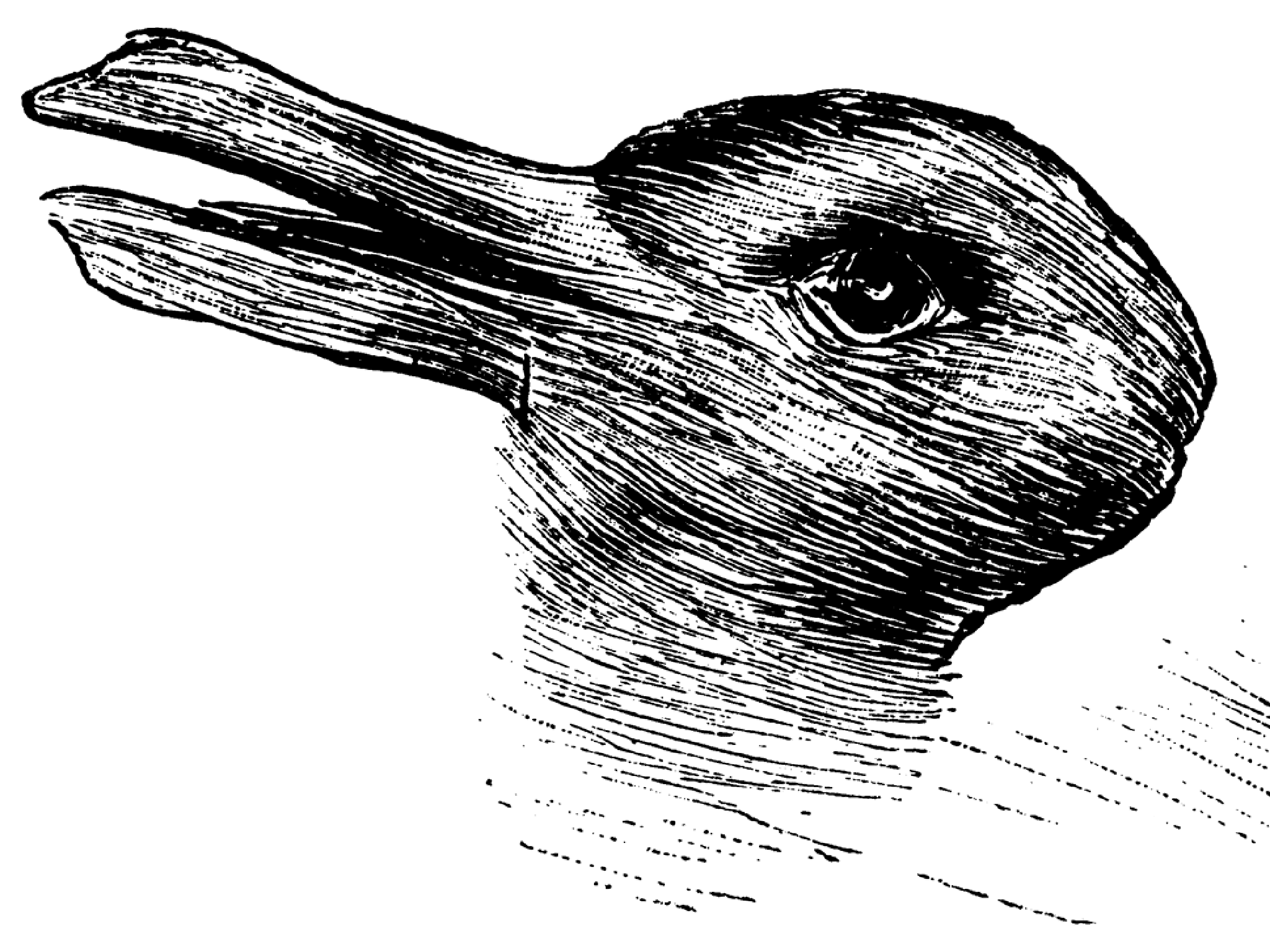 Drawn rabbit psychological Illusion tell or you that