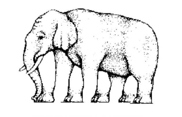 Drawn optical illusion visual illusion Elephant Illusion Elephant Optics Optical