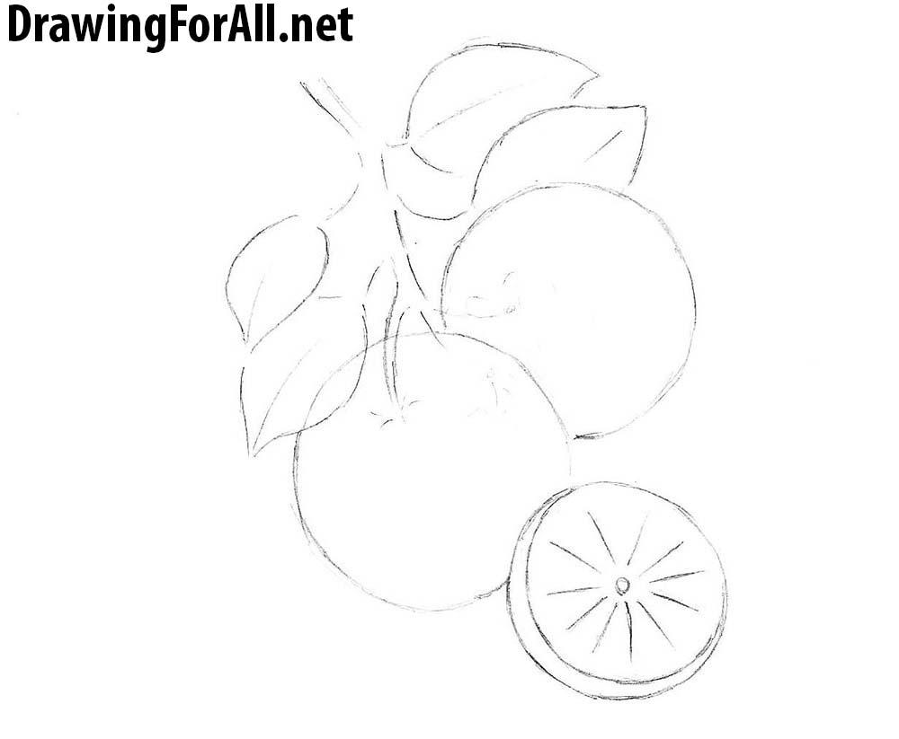 Drawn orange line drawing Step draw net to pencil