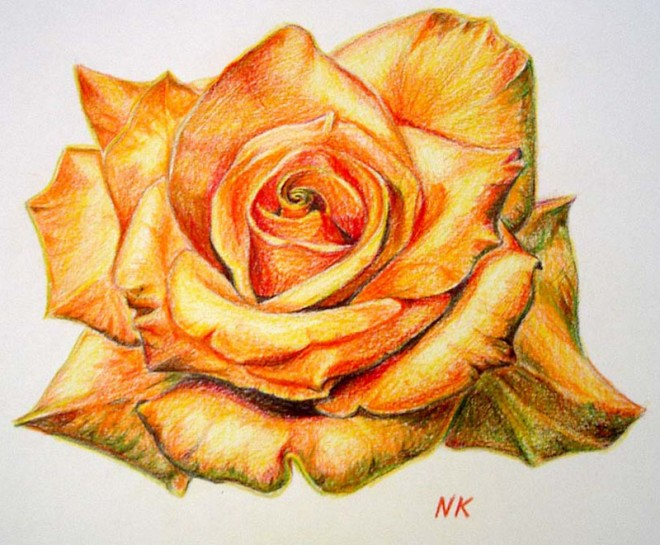 Drawn orange Drawings Drawings Flower Beautiful