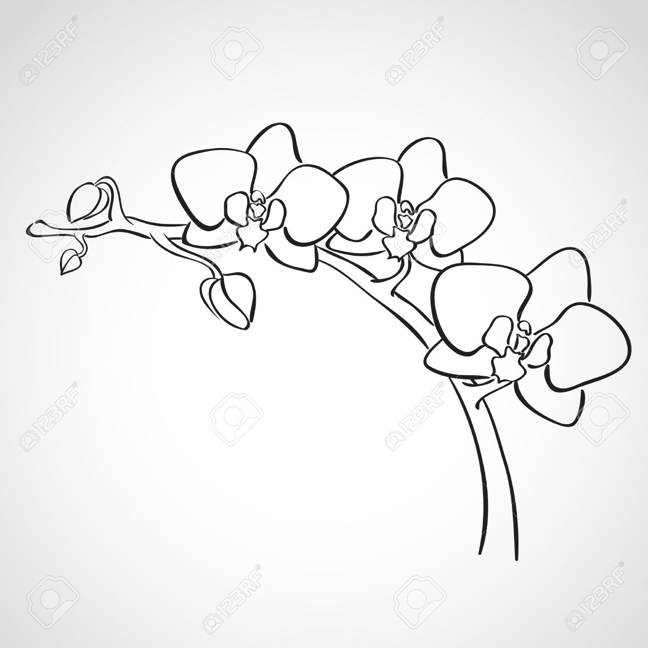 Drawn orchid  drawn branch Stock 27321478