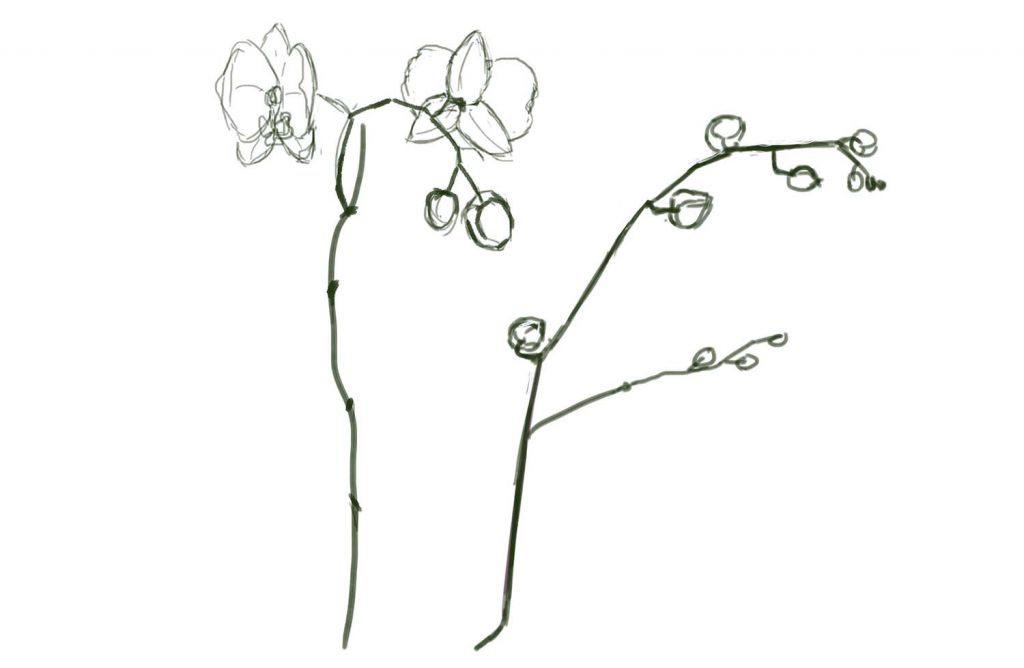 Drawn orchid A art draw draw How