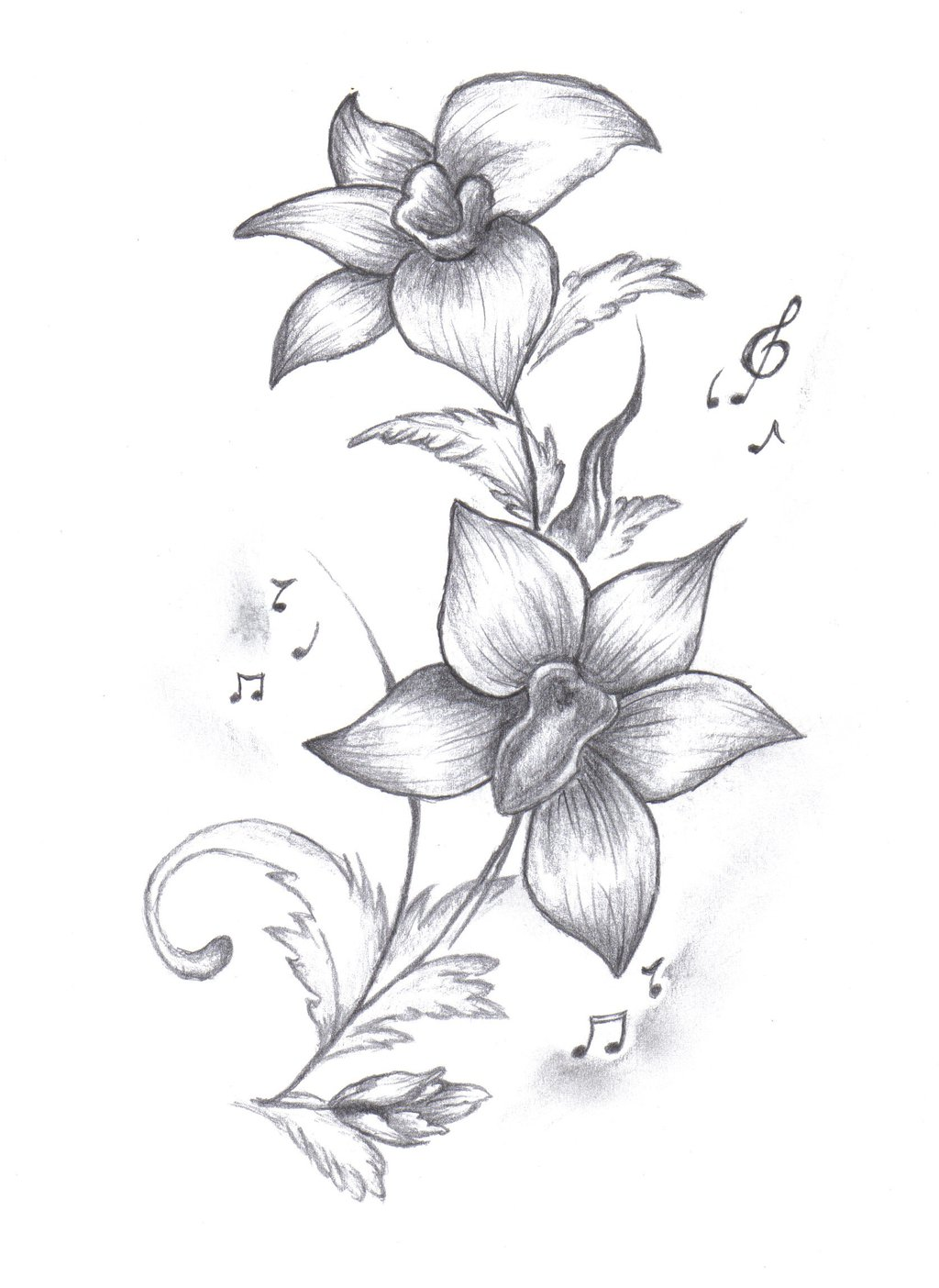 Drawn orchid Gousicteco: Easy Images Drawing Orchid