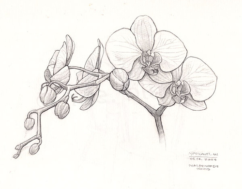 Drawn orchid Sketches redmeg8 by sketch Flickr