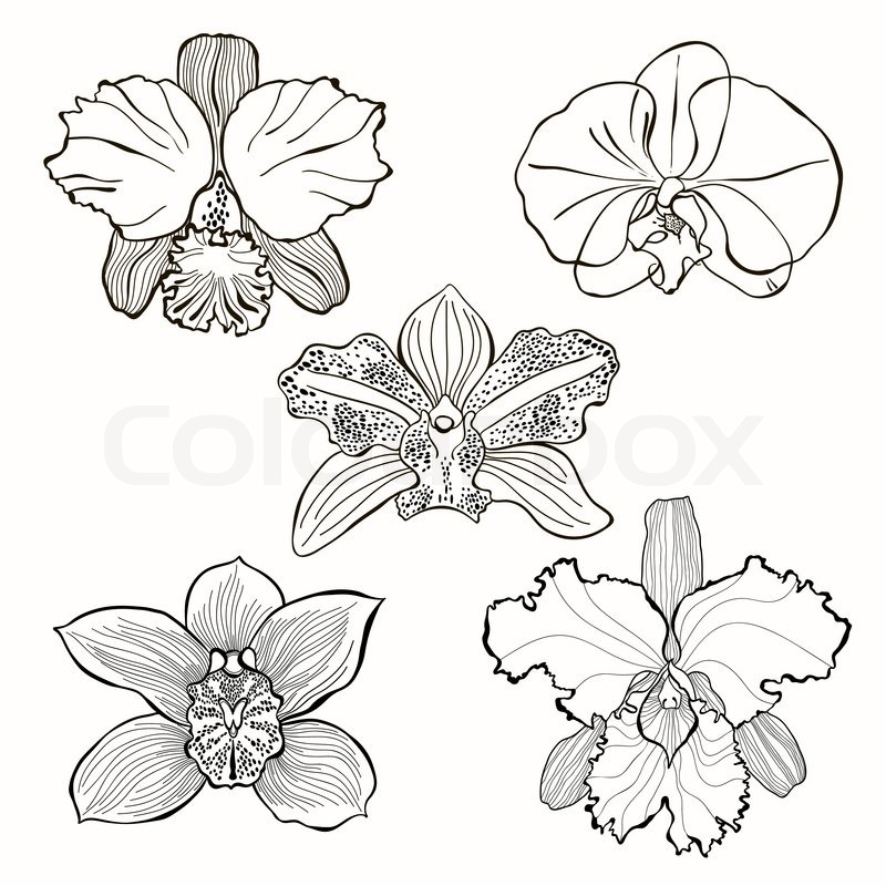 Drawn orchid Set flowers  Hand flowers