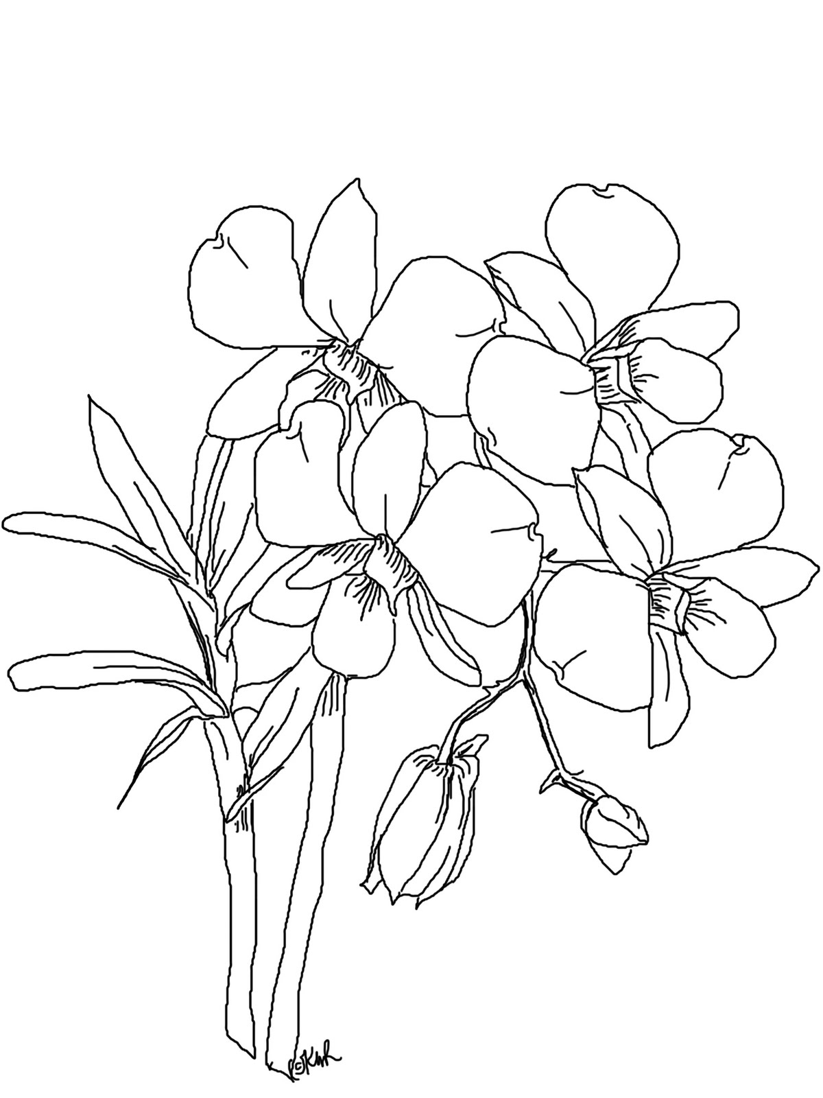 Orchid clipart sketch Easy Orchid Drawing gousicteco: Images