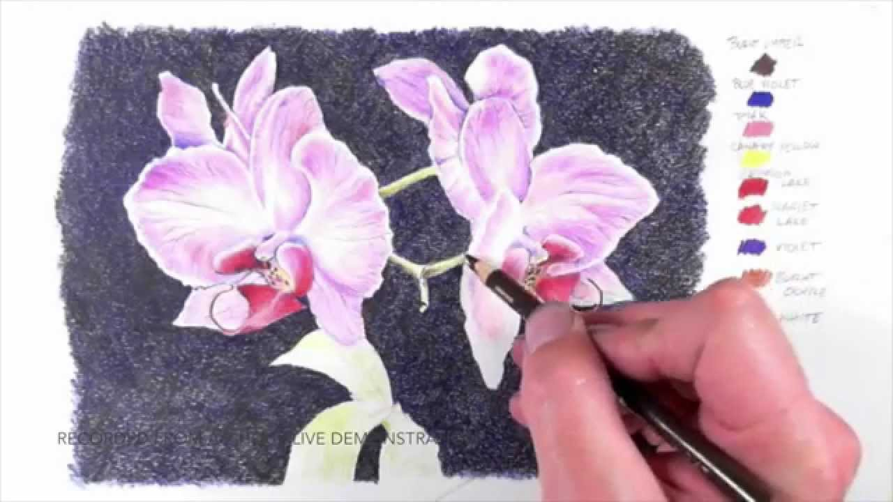 Drawn orchid colour pencil Tutorial YouTube Excerpts  Orchid