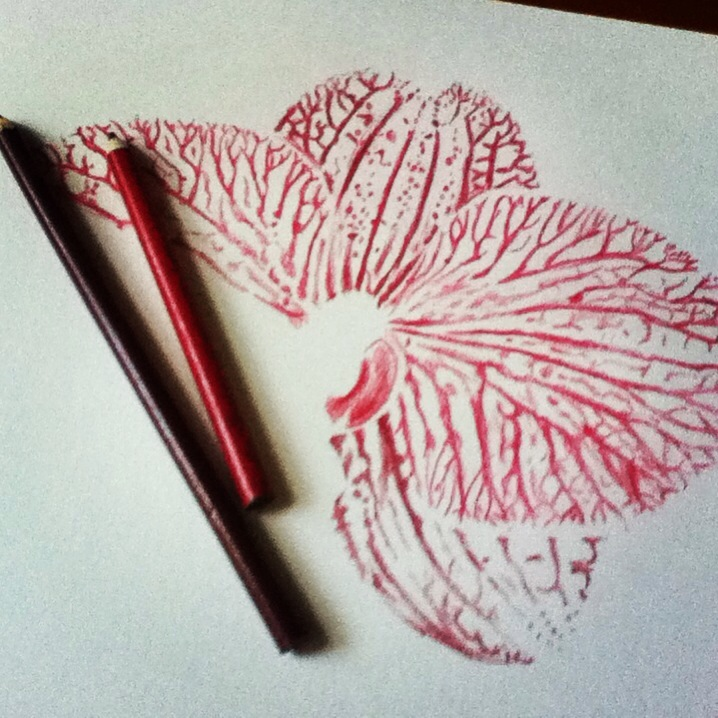 Drawn orchid colour pencil Study Orchid colored  skills–