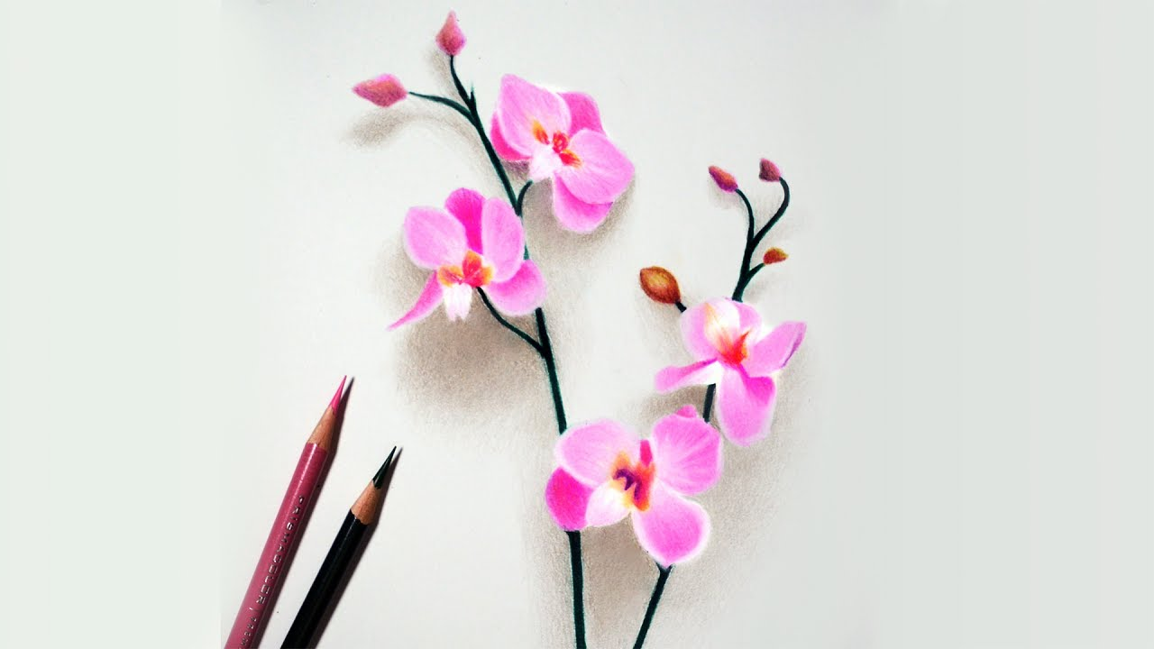 Drawn orchid colour pencil To Colored tutorial How orchids