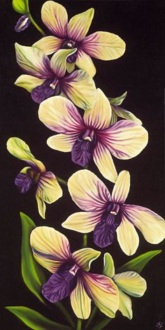 Drawn rose bush cooktown orchid Giclee to Google Night how
