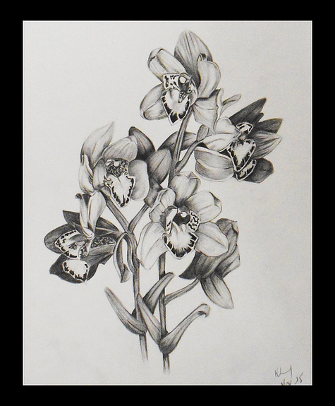 Drawn orchid graphite Orchid orchid Painters cluster of