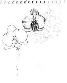 Drawn orchid graphite Colourbox orchid illustration car Hand