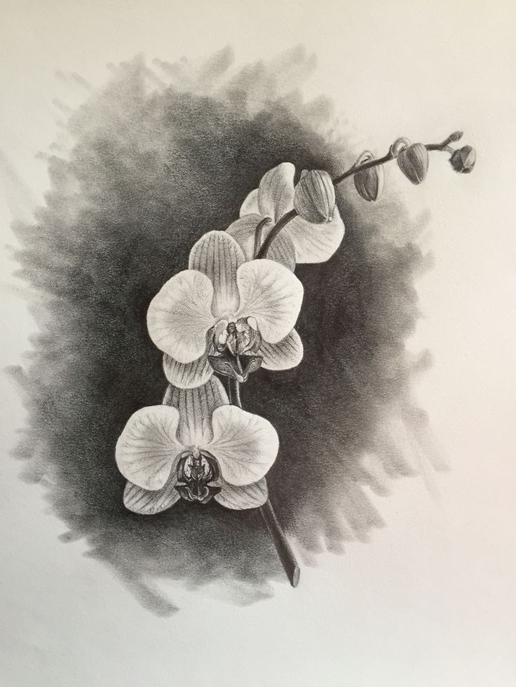 Drawn orchid graphite Pinterest Bill 122 images of