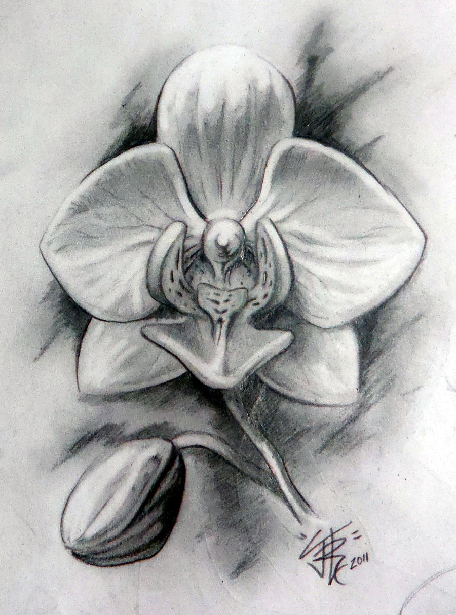 Drawn orchid graphite Tattoo in DeviantArt Tattoo Orchid