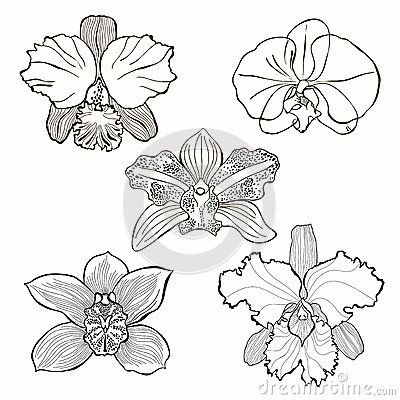 Drawn orchid hand drawn Pinterest set 8 orchid drawn